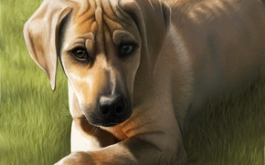 Picture grass, look, animal, dog, art, muzzle, ears