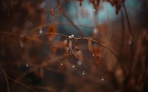Wallpaper leaves, drops, branch, bokeh