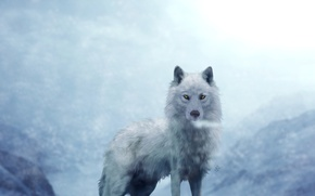 Picture white, wolf, in the background, mountains