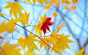 Picture autumn, leaves, macro, background, tree, Wallpaper, yellow, red, wallpaper, leaves, widescreen, background, leaves, macro, tree, …