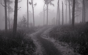 Picture fog, trail, Forest, twilight