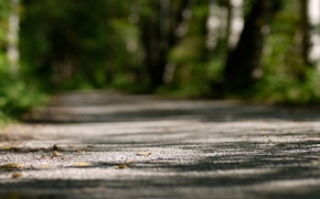Wallpaper focus, light, nature, trees, trail, 1920x1080, path, bokeh, trees, focus, light, nature, bokeh