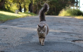 Picture road, cat, tail, grey