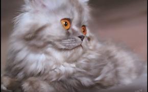 Picture eyes, kitty, Koshak
