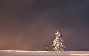 Picture winter, landscape, tree, people