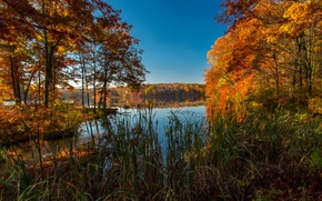 Picture autumn, trees, lake, USA, the colors of autumn, Ice Lakes Colorado