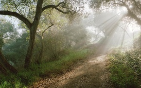 Wallpaper rays, the sun, path, forest