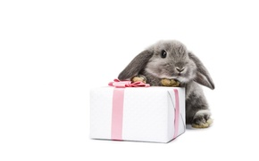 Wallpaper bow, box, hare
