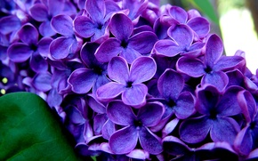 Picture macro, Branch, lilac