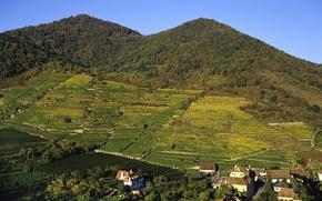 Picture forest, mountains, field, home, Austria, plantation, Wachau