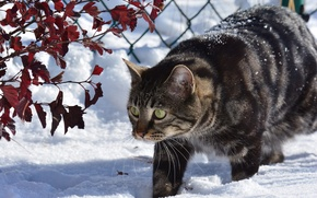 Picture winter, cat, cat, snow, branches