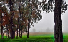 Picture field, autumn, grass, trees, fog