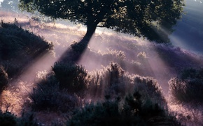 Picture light, fog, morning
