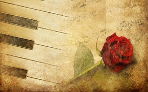 Picture flower, rose, red rose, piano, red, vintage, music