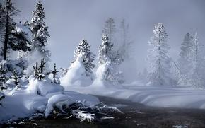 Wallpaper the snow, snow, tree, winter