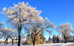 Picture winter, frost, the sun, snow, trees, Park, frost, Winter, Snow, Trees, frost, Parks