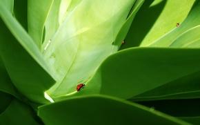 Wallpaper Green, beetle, leaves