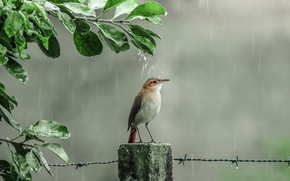 Picture drops, rain, shower, bird