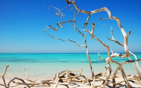 Picture sea, trees, the ocean, shore, dry, curves, Sunny, Cuba
