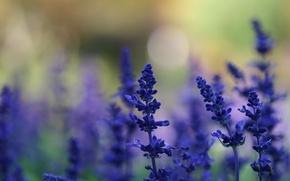 Picture summer, macro, light, flowers, nature, glare, background, glade, plants, blur, blue, lavender