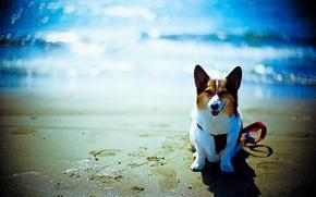 Picture beach, each, the ocean, dog, bokeh