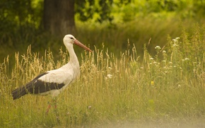 Picture flowers, stepping, beak, Wallpaper, stork, tree, saver, greens, is, wings, background, nature, meadow, bird, summer, ...