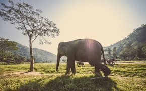 Picture forest, animals, grass, rays, trees, elephants, the herd, ublic