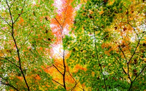 Picture autumn, leaves, trees, branches