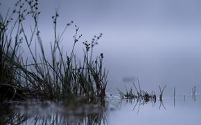Picture macro, night, nature, lake, reed