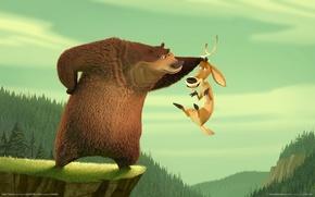 Picture deer, bear, Hunting season