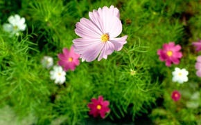Picture flower, summer, macro, nature, nature