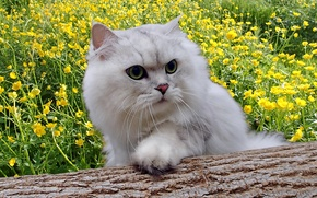 Picture cat, flowers, fluffy