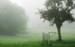 Picture field, fog, sport, gate