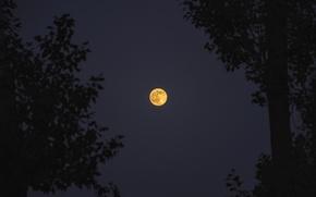 Picture red, moon, hot, photographer, night, orange, nice, armenia, yerevan, edwin-i, supermoon