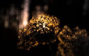Picture Light, Winter, Sun, Golden, Macro, Forest, Rays, Dusk, Cotton