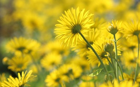 Picture mood, spring, the flowers are yellow