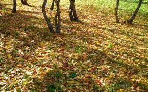 Wallpaper Autumn, leaves