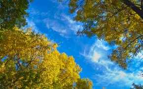 Picture autumn, leaves, trees, nature, blue sky