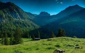 Picture forest, glade, Mountains, house