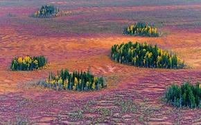 Picture autumn, trees, Russia, island, East Siberian taiga