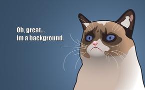 Picture Vector, Cats, Grumpy, Captions