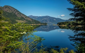 Picture trees, mountains, lake, Canada, Upper Campbell Lake, Strathcona Park