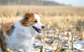 Picture winter, field, dog