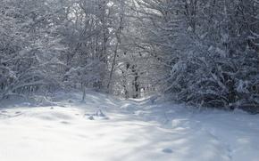 Picture winter, forest, snow, trees, Kuban, Akela White, Lago-Naki