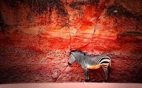 Picture wall, stone, Zebra