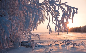 Picture winter, frost, the sun, snow, trees