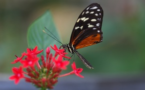 Picture flower, butterfly, leaf, wing, antennae