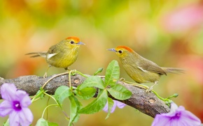 Picture leaves, flowers, birds, branch, pair