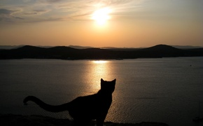 Picture Sunset, The sky, Sea, Cat, Silhouette