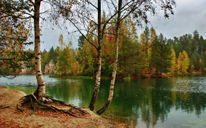 Picture trees, autumn, river, nature